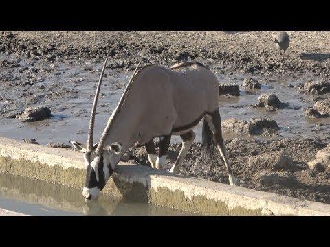 BOWHUNTING In NAMIBIA AFRICA!! {EKUJA SAFARIS}