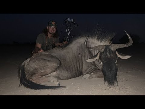 Bowhunting GIANT Wildebeest In Africa!! {First Time}
