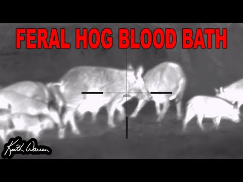 Fighting the Feral Hog INFESTATION with THERMAL!
