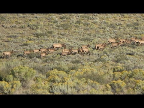 Public Land Hunters RUINED Our Elk Hunt!!!! (I Made a Bad Shot)