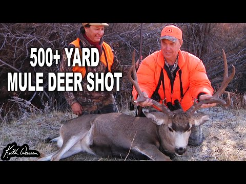 .338 Lapua vs Trophy Mule Deer