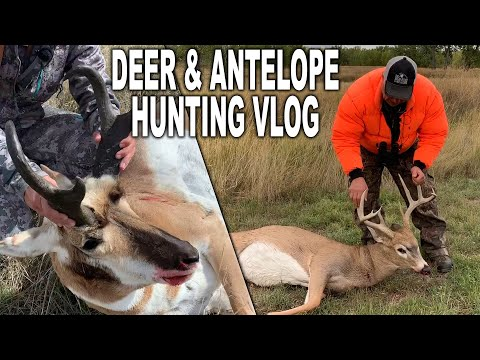 I thought I MISSED! Spot n Stalk Hunting in Montana