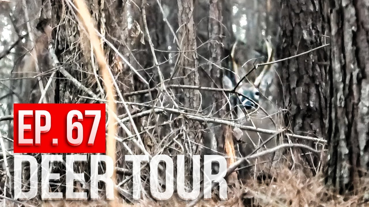 ARROW RELEASED in ALABAMA! – DEER TOUR E67