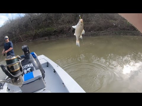 The WHITE BASS are RUNNING!! {Catch Clean Cook} Blackened Fish
