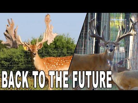 Stud Bucks at Keeper Ranch | Deer and Wildlife Stories