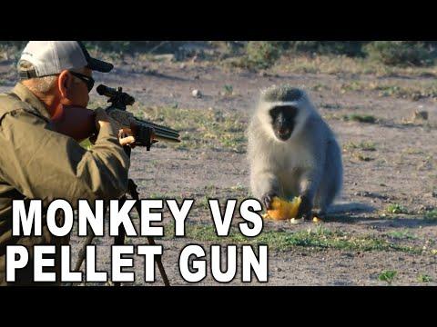 Monkey HEADSHOT with Air Gun