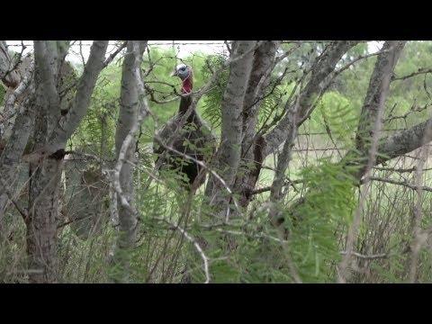 Turkey Hunting In The Rain! Opening Morning In Texas
